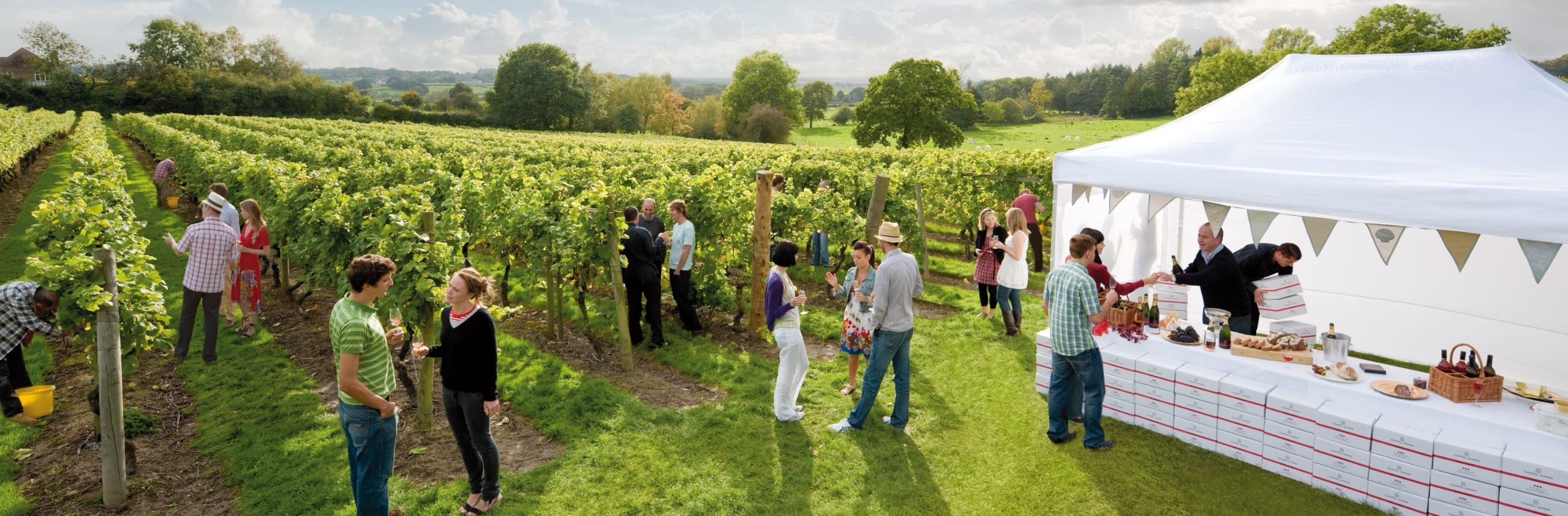 People talking at a vineyard